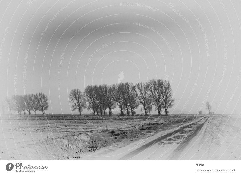 Dezember 2012 weiß Winter schwarz Schnee grau Eis natürlich Klima Frost silber Allee Schleswig-Holstein Landweg