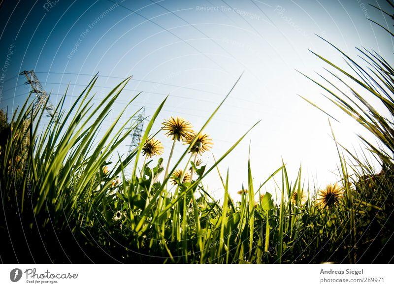 Look up Himmel Natur blau grün Pflanze Landschaft gelb Umwelt Wiese Gras Frühling Denken Garten träumen beobachten Löwenzahn