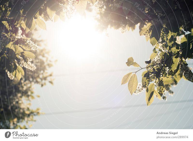 Above Himmel Natur Pflanze Baum Sonne Blatt Landschaft Umwelt Frühling Blüte hell Schönes Wetter Wolkenloser Himmel Grünpflanze