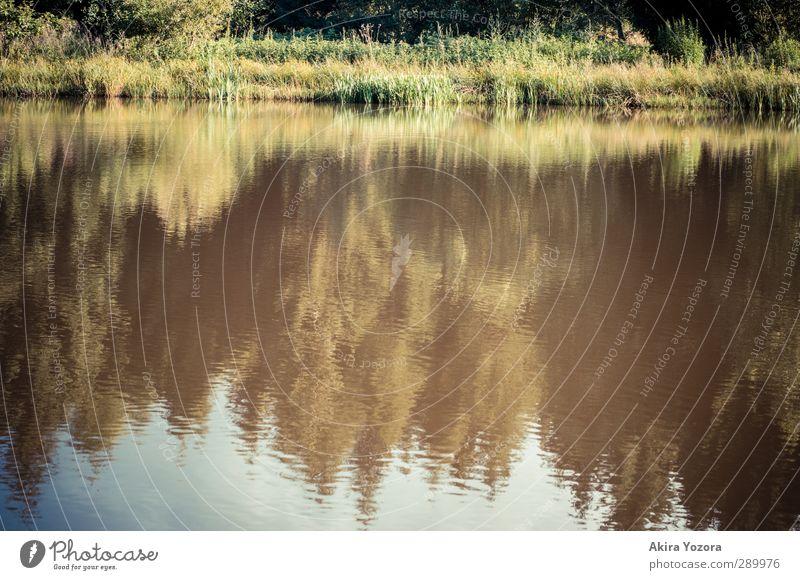 Verschwommene Welt See Reflexion & Spiegelung Baum Wald Wiese Himmel grün blau braun