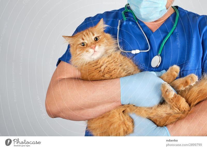 Katze Mensch Jugendliche Mann blau rot Hand Tier 18-30 Jahre Erwachsene Krankheit Haustier Medikament Arzt Krankenhaus Halt