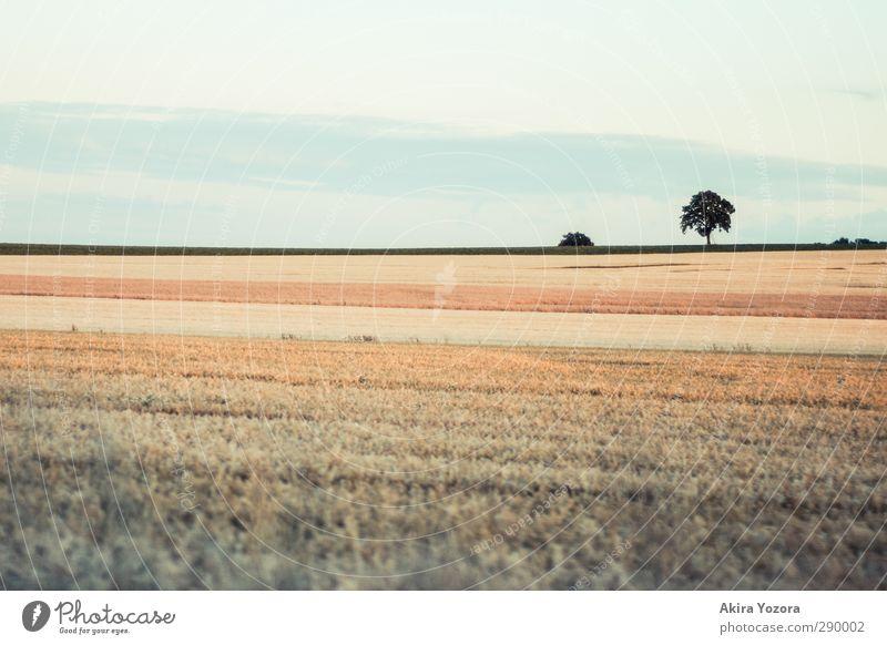 Am Rande der Welt Himmel Natur blau grün Baum Landschaft braun orange Feld