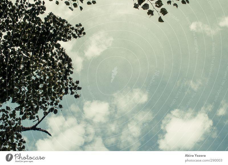 Freier Blick Himmel blau weiß Baum Wolken schwarz Freiheit Hoffnung