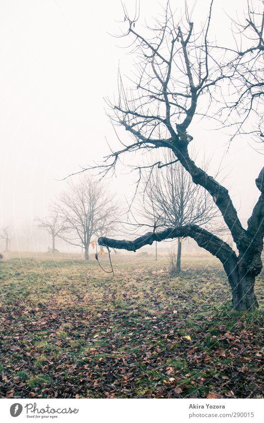 Tristheit des Herbstes Natur grün Baum Landschaft schwarz Wiese braun orange Nebel