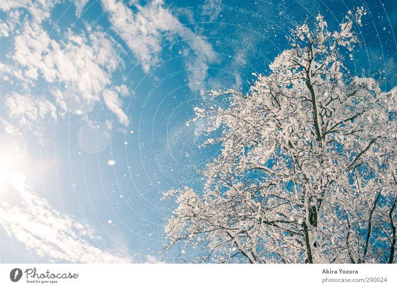 Schneefall Himmel Natur Baum Wolken Landschaft Schönes Wetter