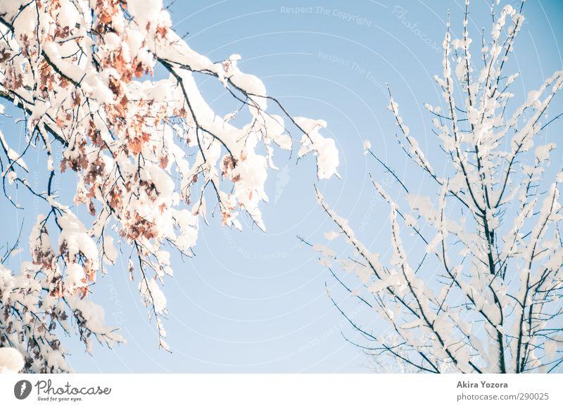 Traumhafes Stückchen Winter Himmel Natur Baum Blatt Winter Schnee natürlich Ast Wolkenloser Himmel