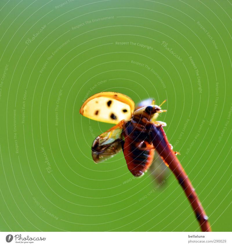 Einen glücklichen Start ins Jahr 2013 Natur Pflanze Tier Schönes Wetter Gras Blatt Garten Park Wiese Feld Wald Wildtier Käfer fliegen krabbeln sitzen braun grün