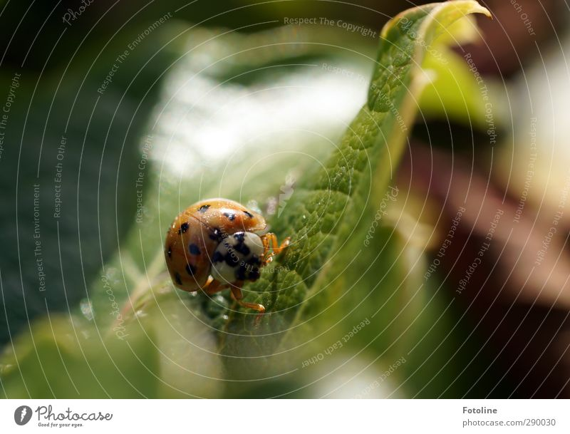 Ein glückliches Neues Jahr Umwelt Natur Pflanze Tier Sommer Blatt Garten Käfer Tiergesicht 1 hell klein natürlich grün rot schwarz Insekt krabbeln Marienkäfer