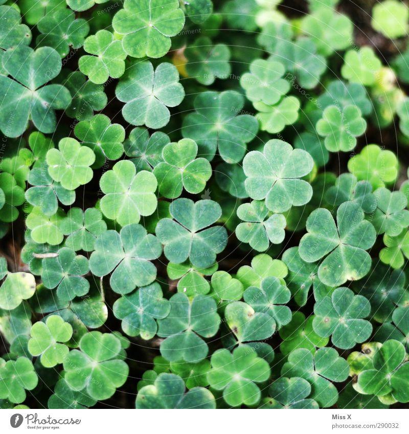 Die Familie Beck wünscht ein gutes neues Jahr Pflanze Blatt Wald grün Glück Kleeblatt Farbfoto Außenaufnahme Nahaufnahme Muster Menschenleer Vogelperspektive