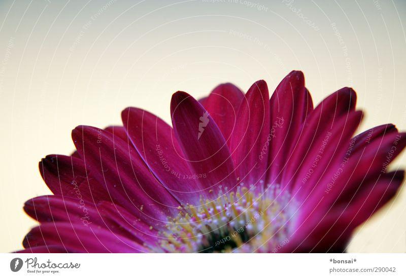 ein frohes, gesundes und glückliches 2013! Natur schön Pflanze Farbe Blume Blatt Glück Blüte natürlich Wachstum leuchten weich Blühend rein zart nah