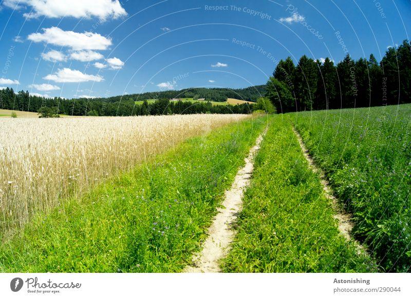 leicht bewölkt Umwelt Natur Landschaft Pflanze Himmel Wolken Sommer Wetter Schönes Wetter Wärme Gras Sträucher Grünpflanze Wiese Feld Wald Hügel Wege & Pfade
