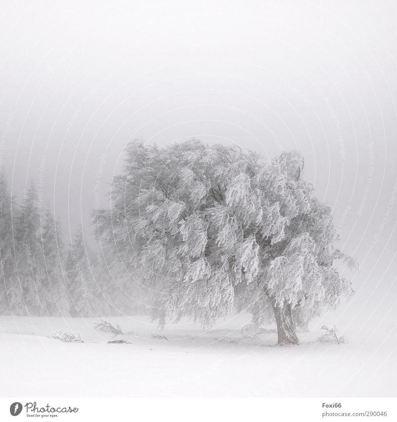 """muss das denn sein? """"Wetterkapriolen"""" weiß Baum Einsamkeit Winter Landschaft schwarz dunkel Berge u. Gebirge kalt Schnee natürlich Eis Nebel wandern Abenteuer"""