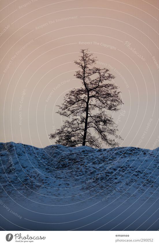 Winterbaum Himmel Natur blau Pflanze Baum Einsamkeit Winter Umwelt dunkel Berge u. Gebirge kalt Schnee Tod Horizont Felsen Wetter