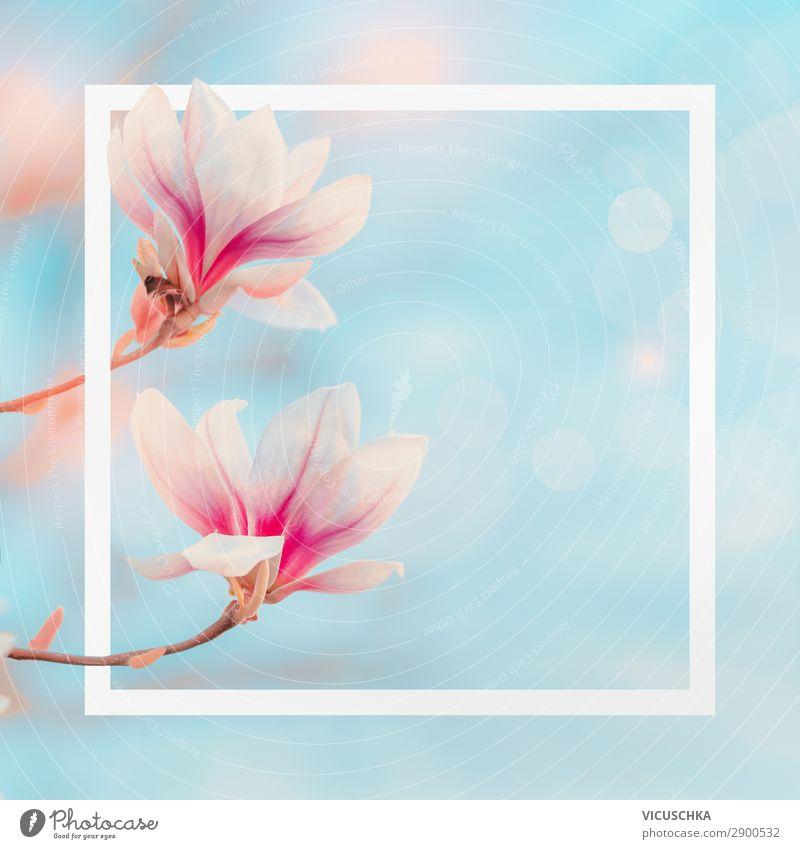 Weißer Rahmen mit Magnolie Blüten Stil Design Sommer Garten Natur Pflanze Frühling Blume Sträucher Blatt Park Blühend rosa Hintergrundbild Magnoliengewächse