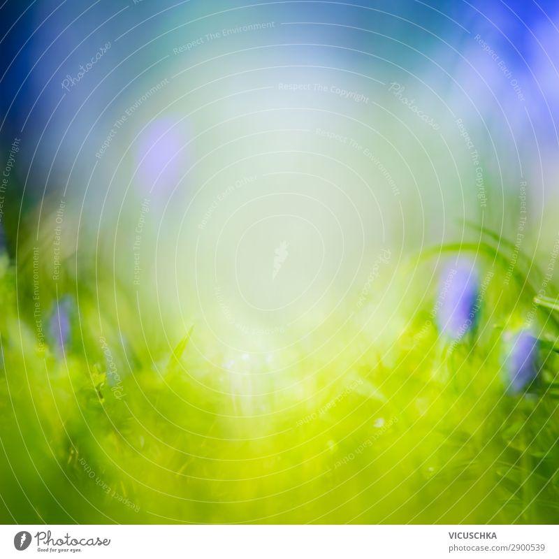 Unscharfer Natur Hintergrund mit Gras und blauen Blumen Lifestyle Design Sommer Garten Pflanze Frühling Schönes Wetter Park Wiese weich Hintergrundbild
