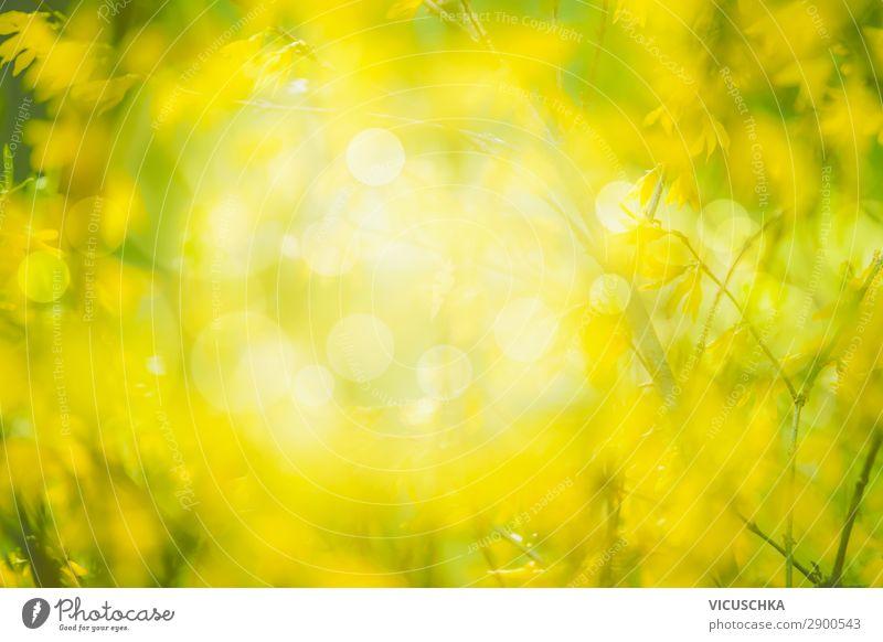 Natur Hintergrund mit gelben Blüten Lifestyle Design Sommer Garten Pflanze Frühling Schönes Wetter Park Wald Blühend Forsithie Hintergrundbild ornamental