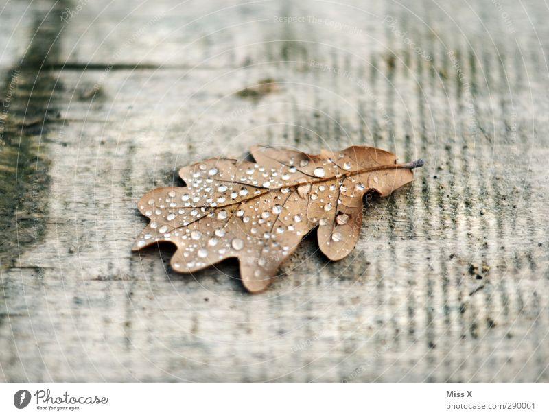 Tau Wassertropfen Herbst Regen Blatt alt nass Eichenblatt Tropfen Holz Farbfoto Gedeckte Farben Nahaufnahme Menschenleer Textfreiraum oben Textfreiraum unten