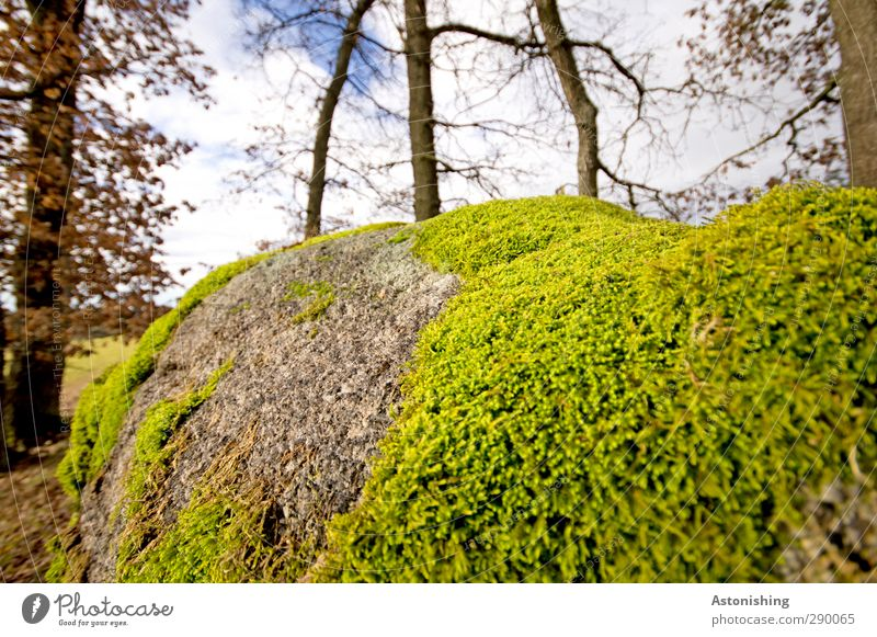 Moos Umwelt Natur Landschaft Himmel Wolken Herbst Wetter Pflanze Baum Gras Sträucher Blatt Wildpflanze Wald weich blau grau grün Stein Felsen Ast Baumstamm