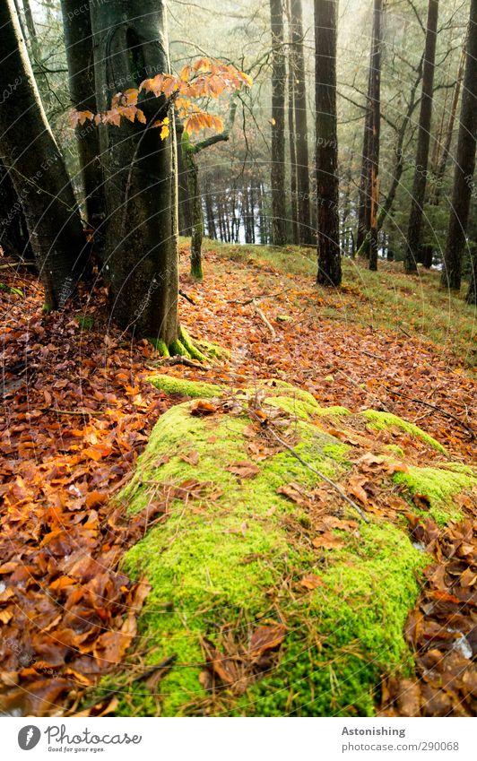 Wald Natur grün Pflanze Baum rot Blatt Landschaft schwarz Umwelt Herbst Gras Stein Luft Felsen Wetter