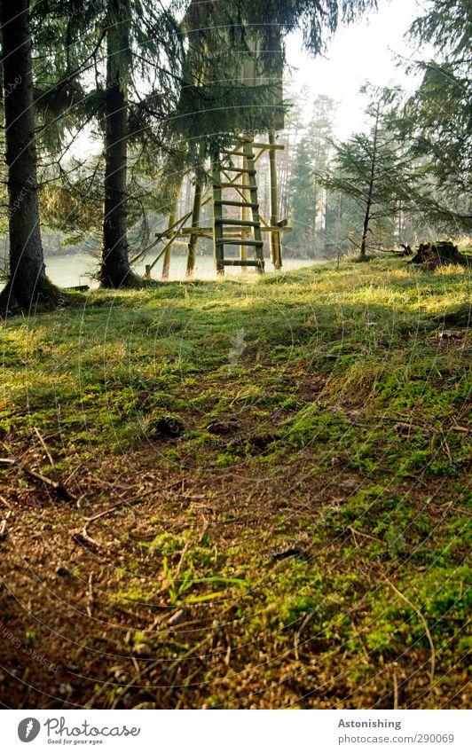 Hochstand Umwelt Natur Landschaft Pflanze Erde Himmel Sonne Sonnenlicht Herbst Wetter Schönes Wetter Baum Gras Sträucher Moos Blatt Wiese Wald Hügel stehen grün