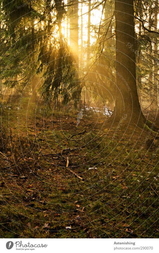 Licht Umwelt Natur Landschaft Pflanze Erde Luft Sonne Sonnenaufgang Sonnenuntergang Sonnenlicht Herbst Wetter Schönes Wetter Wärme Baum Gras Sträucher Moos