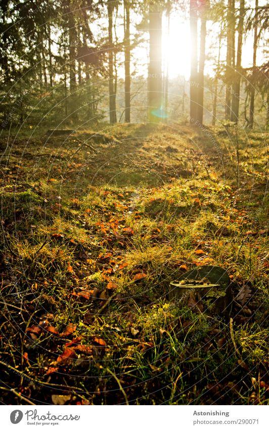 im Wald Himmel Natur grün Pflanze Baum Sonne Landschaft schwarz gelb Umwelt Wärme Herbst Gras Holz hell