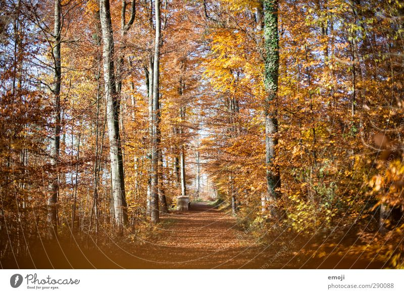 Herbst Natur Blatt Landschaft Wald gelb Umwelt Herbst orange gold Schönes Wetter Laubbaum Laubwald