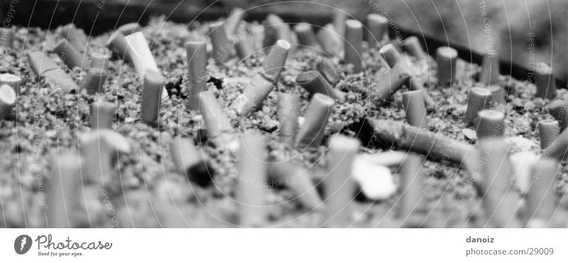 Kippenlandschaft Rauchen Lastwagen obskur Zigarette Zigarettenstummel