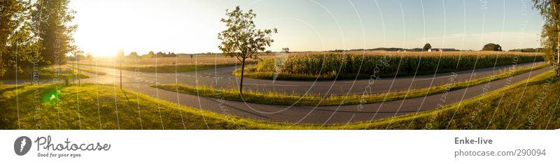 Die gerade Kurve Ausflug Freiheit Fahrradtour Sommer Sonne Fahrradfahren Joggen wandern Umwelt Natur Landschaft Himmel Wolkenloser Himmel Schönes Wetter Wiese