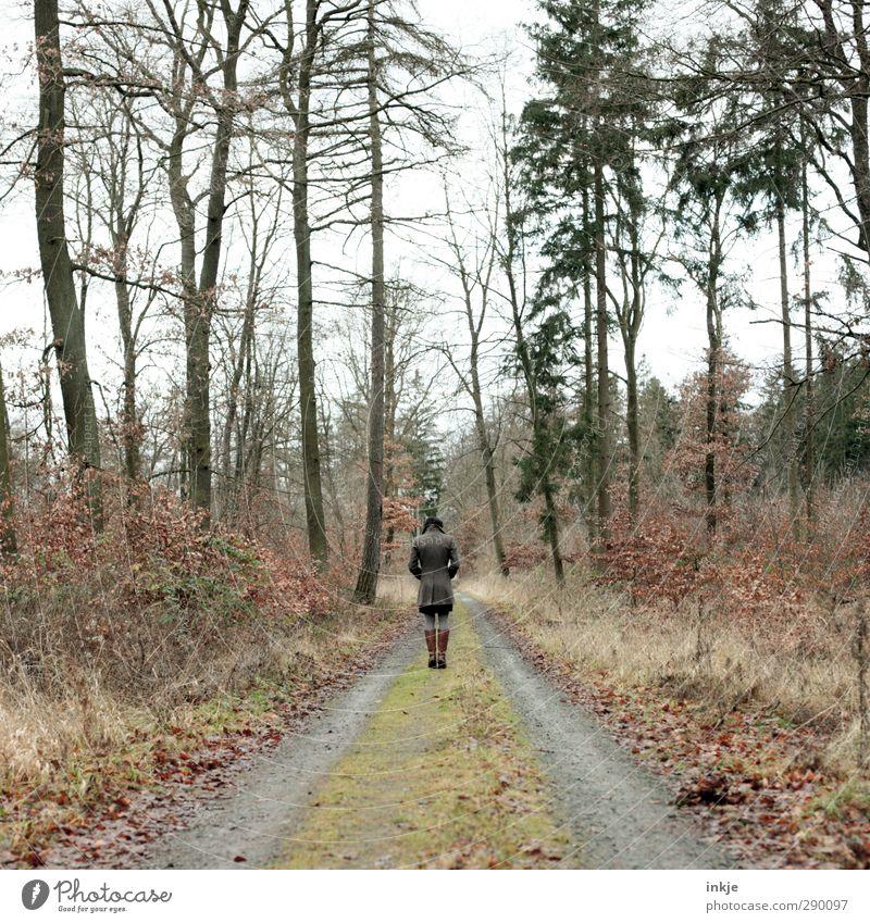 Herbstspaziergang Mensch Frau Natur Ferien & Urlaub & Reisen Pflanze Baum Einsamkeit Landschaft Wald Erwachsene Umwelt Ferne kalt Gefühle Wege & Pfade