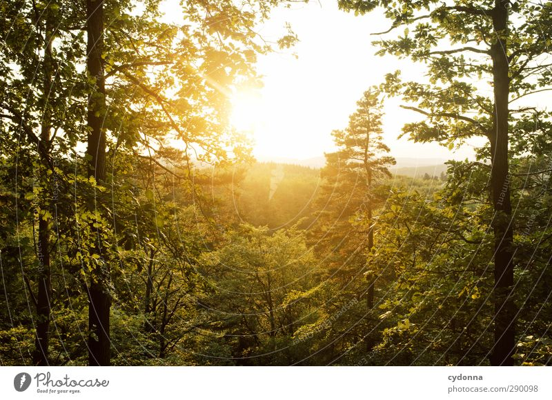 Abendsonne Natur grün Sommer Baum ruhig Landschaft Erholung Wald Umwelt Ferne Berge u. Gebirge Wärme Leben Freiheit Horizont träumen