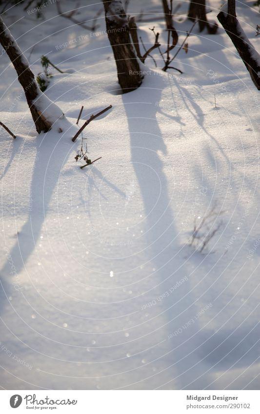Der erste Schnee Natur weiß Pflanze Landschaft Winter Umwelt Holz glänzend Klima weich Pulverschnee