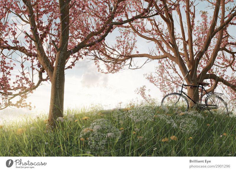 Unter Kirschblüten Lifestyle Freizeit & Hobby Ausflug Freiheit Sport Fahrradfahren Natur Landschaft Pflanze Sonnenlicht Frühling Schönes Wetter Baum Gras Garten