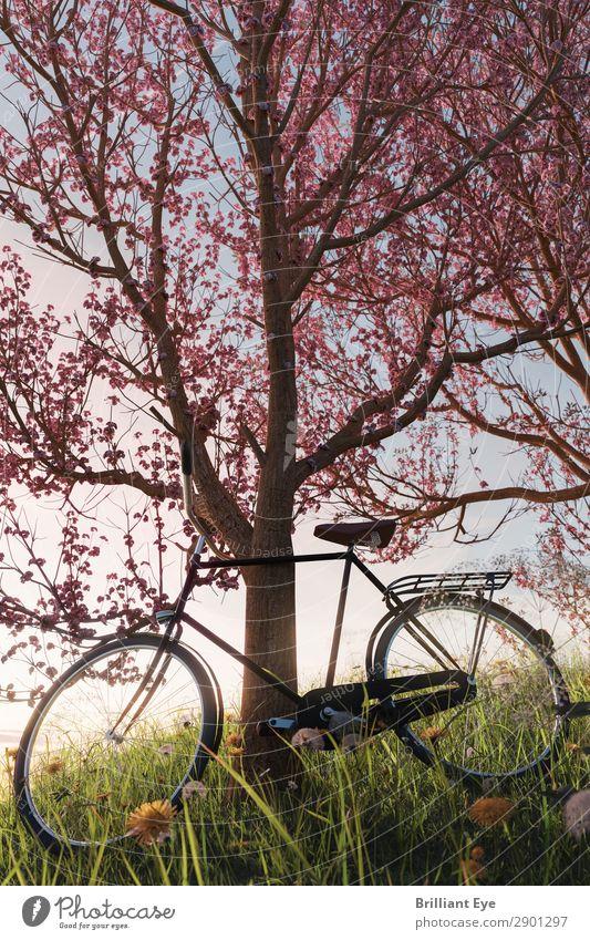 Lehn dich zurück Lifestyle Freizeit & Hobby Fahrradfahren Ausflug Abenteuer Sonne Sport Natur Pflanze Schönes Wetter Baum Blüte Garten Park Wiese Feld Erholung