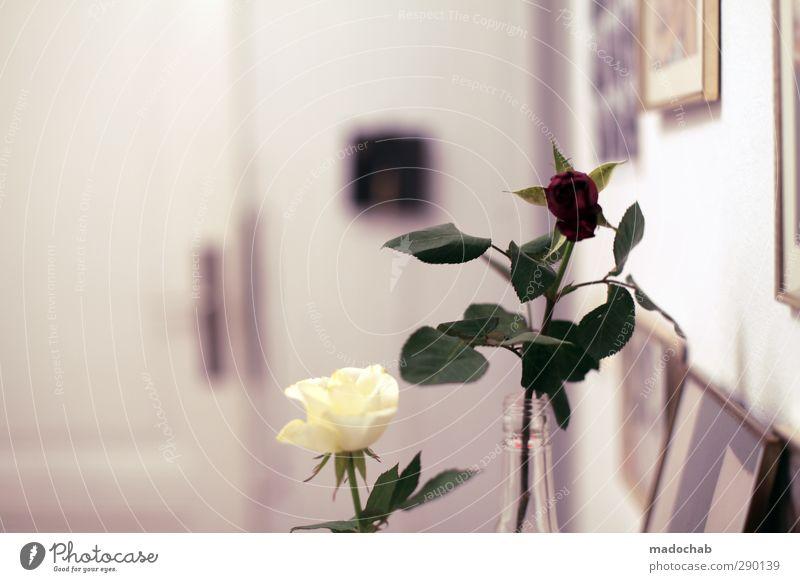 Begrüßungskomitee schön Erholung Liebe Leben Gefühle Innenarchitektur Blüte Stil Wohnung Zufriedenheit elegant Design Lifestyle Häusliches Leben Idylle
