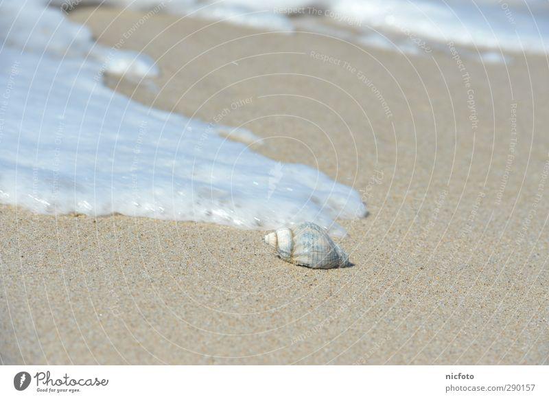 Muschel in der Brandung Natur Urelemente Erde Sand Wasser Wellen Küste Strand Nordsee Ostsee Meer einfach Flüssigkeit Unendlichkeit gut hell nass natürlich