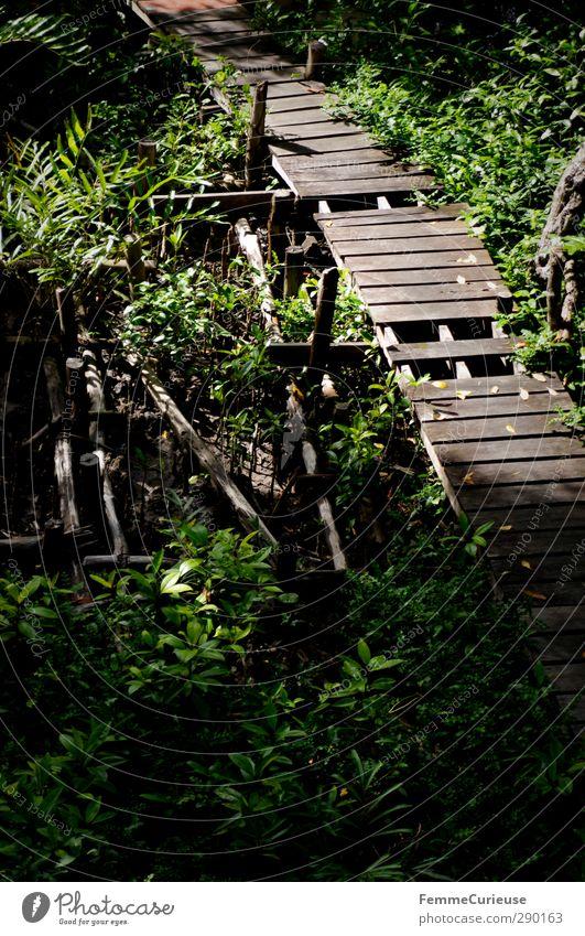 Beeing on a visit to Tarzan. Natur Landschaft nachhaltig Urwald Steg Wege & Pfade Holzbrücke Wald Wärme Pflanze Kambodscha Asien Menschenleer gehen