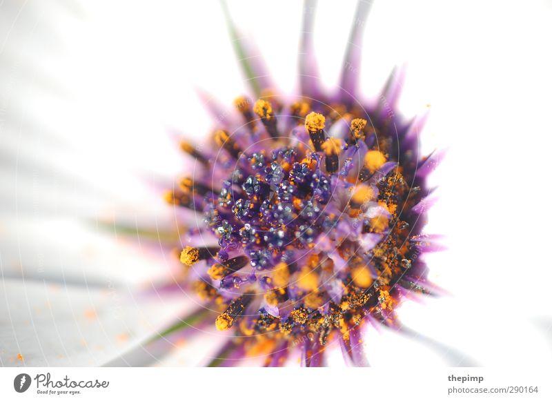Flower Power weiß Sommer Pflanze Blume Blüte Blühend violett Duft