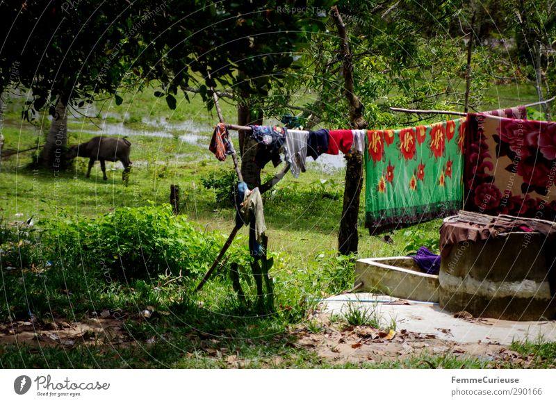 Idylle. Natur Pflanze Baum Wiese Gras Garten Luft Feld Klima Schönes Wetter Sträucher Brunnen Asien Wäsche Landwirt