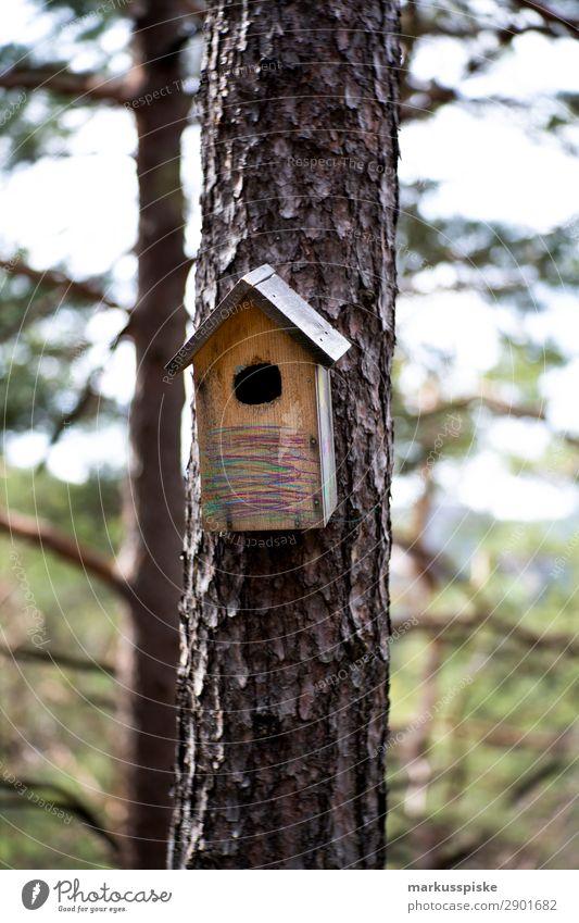 Vogelhaus Kind Natur Pflanze Landschaft Tier Wald Ferne Umwelt Garten Freiheit fliegen Ausflug wandern Wildtier Kindheit