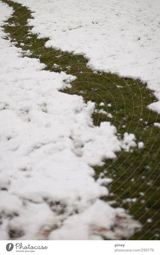 Natur grün weiß Winter kalt Umwelt Schnee Gras Neugier