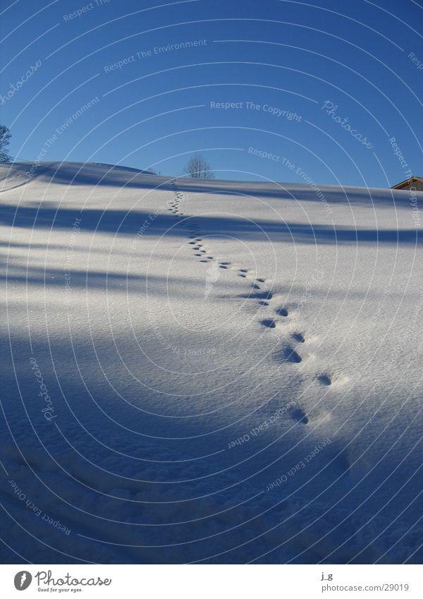 Spuren im Schnee Winter kalt Berge u. Gebirge Wege & Pfade Hügel Berghang Wintertag
