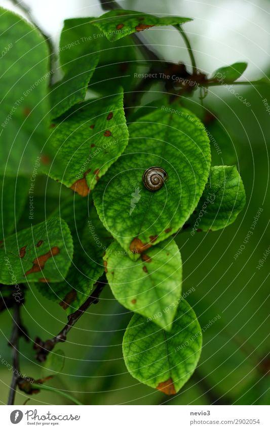 Schneckenhaus Natur Frühling Pflanze Blatt Grünpflanze Garten Park Wiese grün Frühlingsgefühle Leben Jahreszeiten Außenaufnahme natürlich Spirale Landschaft