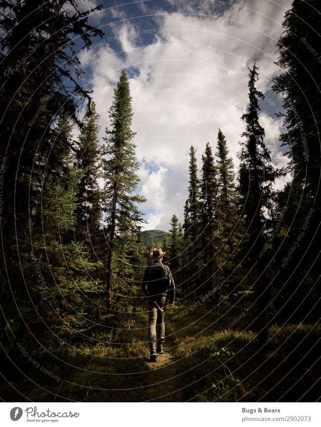 Im Wald Mann Erwachsene Körper 1 Mensch Natur Landschaft Abenteuer Hut Cowboyhut wandern Waldspaziergang Spaziergang entdecken Nadelwald Baum Alaska Kanada