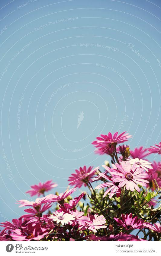 Sommerduft. Natur ästhetisch Blume Blumentopf Blumenkasten blau Himmel (Jenseits) Blüte Blühend rosa Kontrast dezent Muttertag Farbfoto Gedeckte Farben