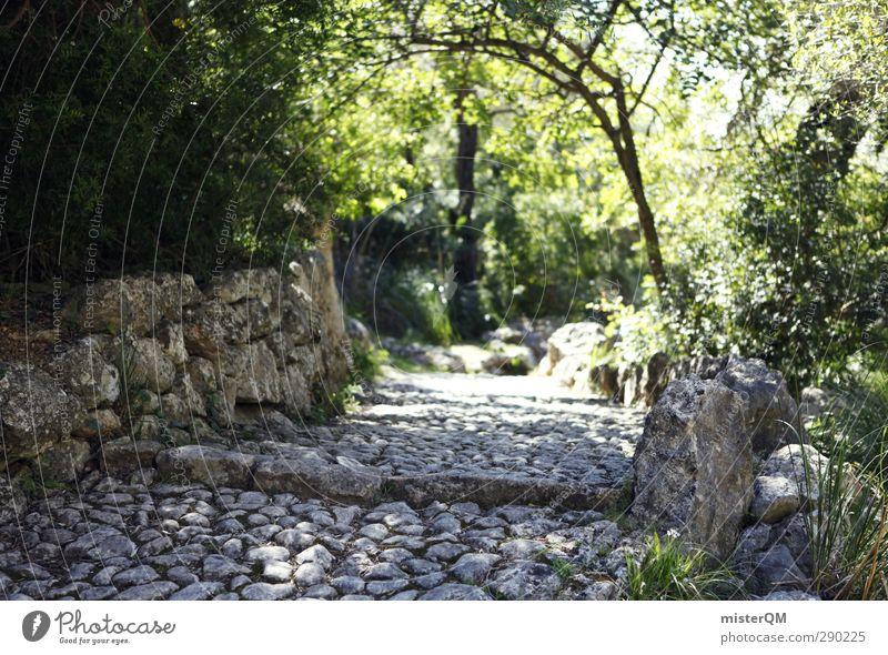 On Old Paths. Natur Sonne Einsamkeit Wege & Pfade Mauer Stein gehen wandern ästhetisch Spanien mediterran Mallorca Surrealismus abgelegen verträumt Waldlichtung