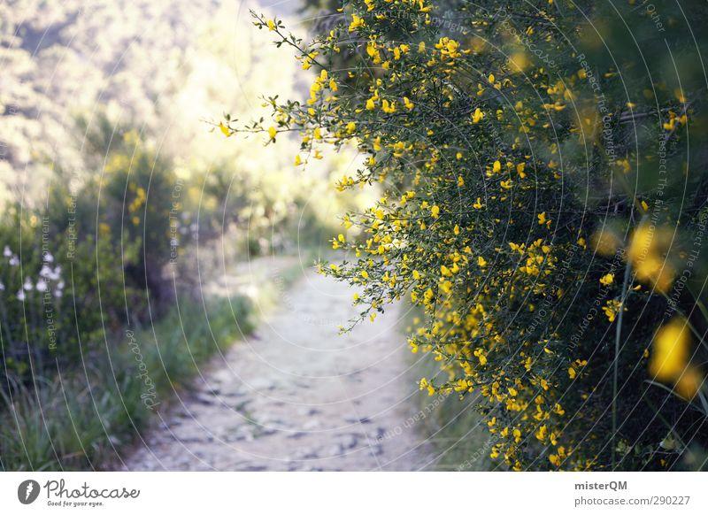 Hidden Valldemossa. Natur Pflanze Landschaft Blüte Wege & Pfade ästhetisch Sträucher Blühend Spanien mediterran Mallorca schäbig Wegrand Pilger Perspektive abstrakt