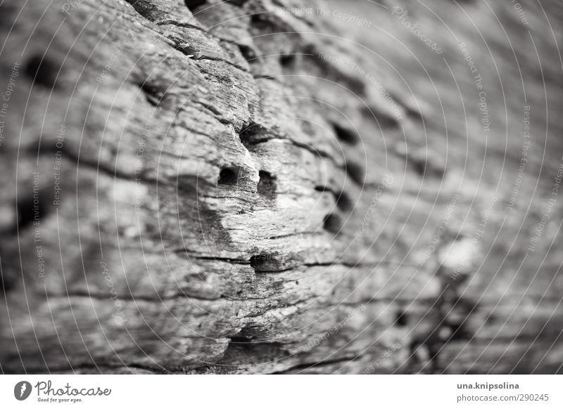gelocht Umwelt Natur Klima Pflanze Baumstamm Baumrinde Holz alt kaputt Krankheit natürlich trocken Wandel & Veränderung Wege & Pfade Zerstörung Loch gelöchert