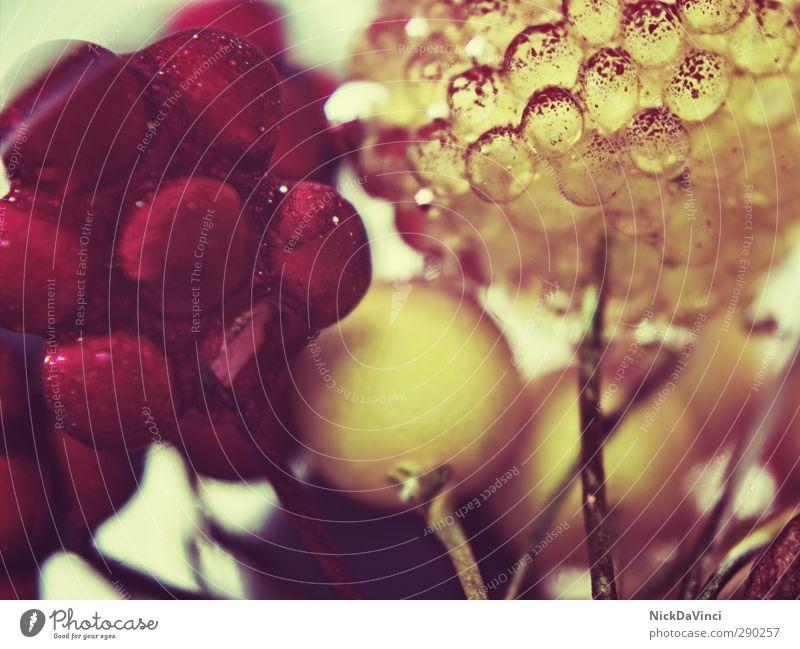 Beerenmischung Ernährung Essen Dekoration & Verzierung genießen Beerenfruchtstand Beerensträucher süß rot gelb lecker Sammlung Anhäufung Detailaufnahme