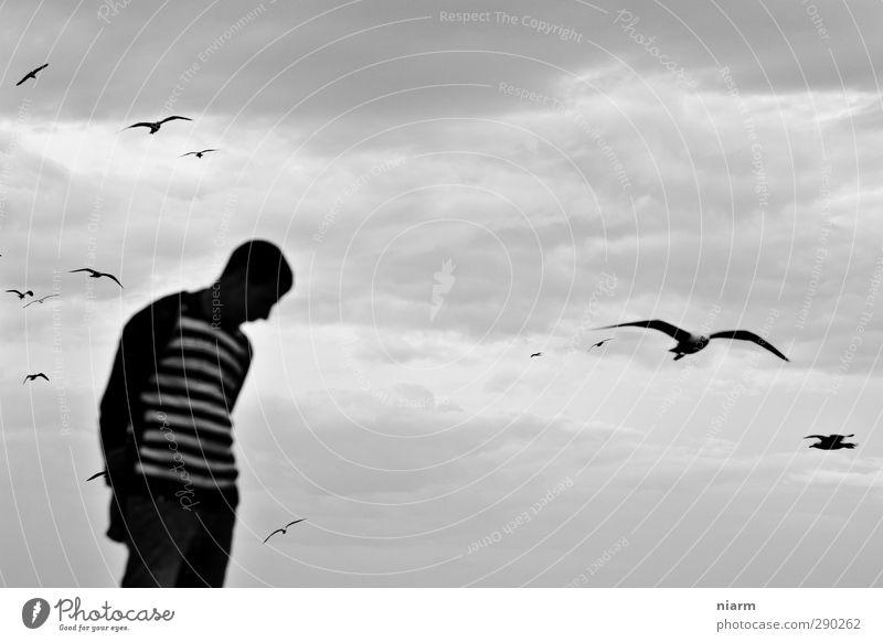 see gulls arriving Mensch maskulin Junger Mann Jugendliche 13-18 Jahre Kind 18-30 Jahre Erwachsene Unwetter Wind Sturm Tier Wildtier Möwe Vogel Schwarm Vorsicht